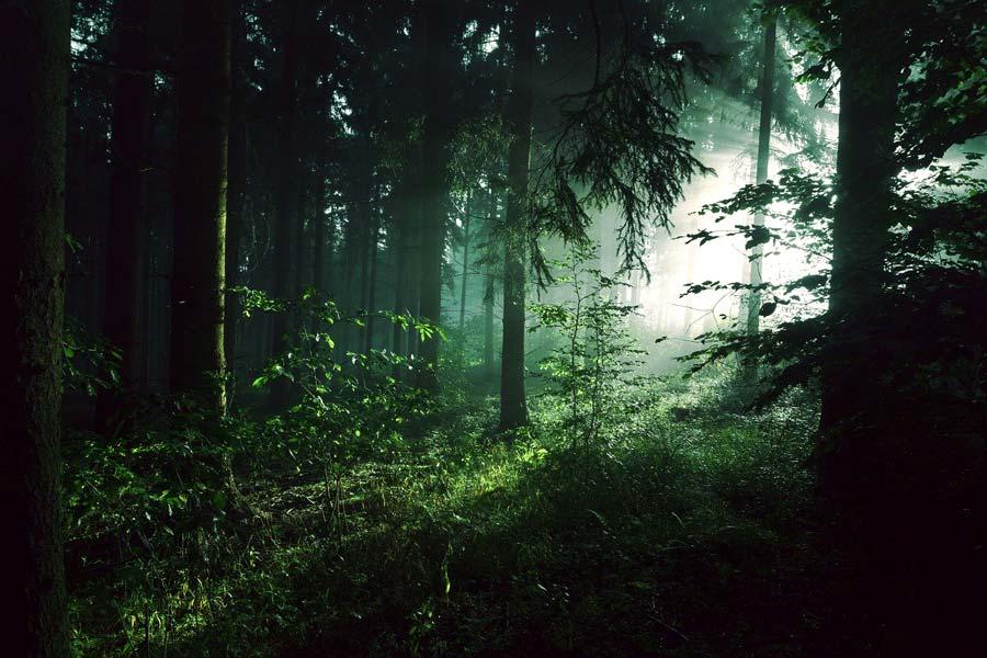 un-bosco-splendido-e-rigoglioso-mente-amica